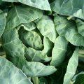 verdure-verdi