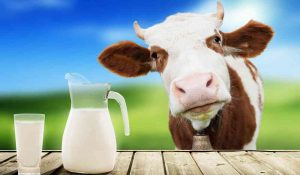 latte-vaccino